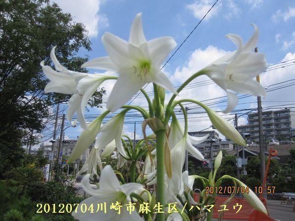 0704flower04