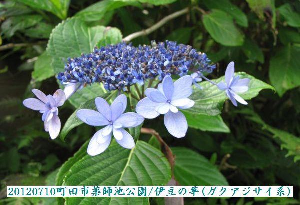 0710yakushi01