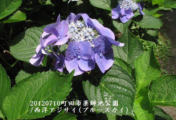 0710yakushi02