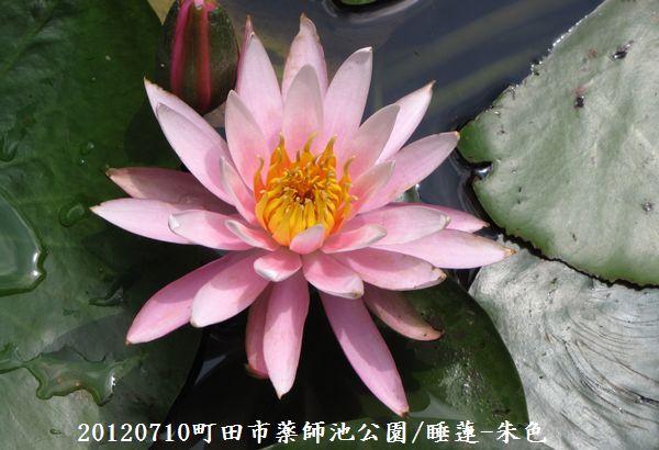 0710yakushi03