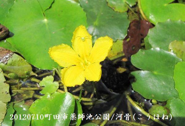 0710yakushi05