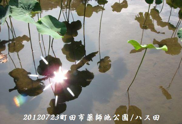 0723yakushi23