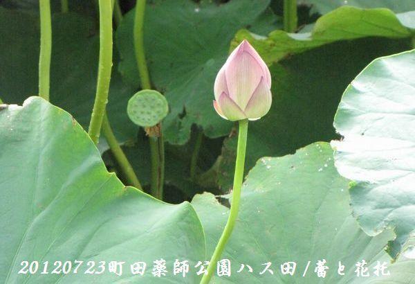 0723yakushji01