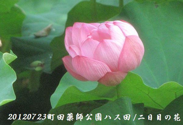 0723yakushji02