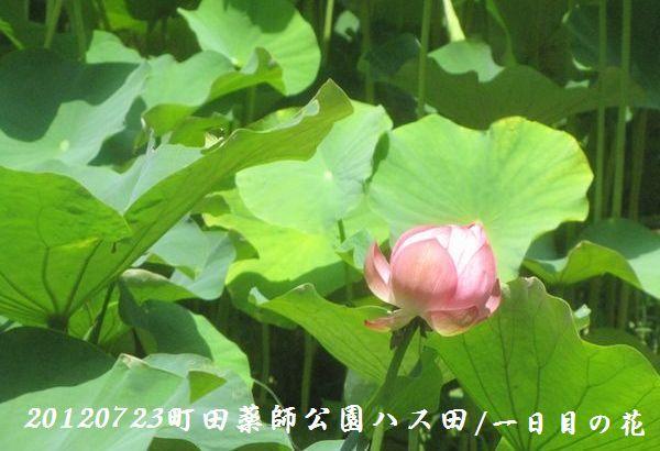 0723yakushji03