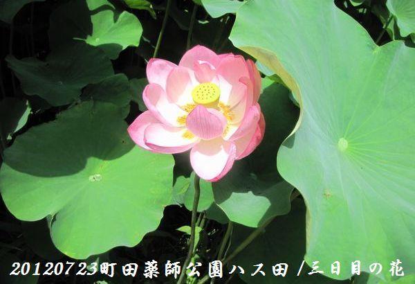0723yakushji05