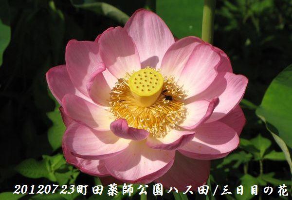 0723yakushji11