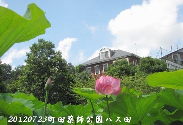 0723yakushji15