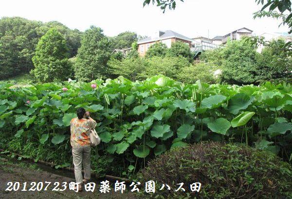 0723yakushji16