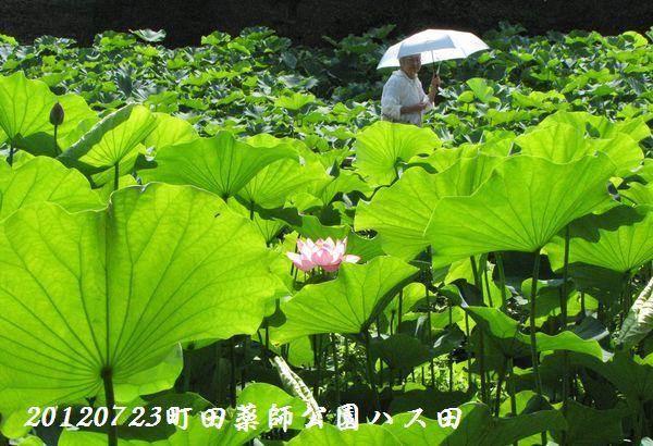 0723yakushji21