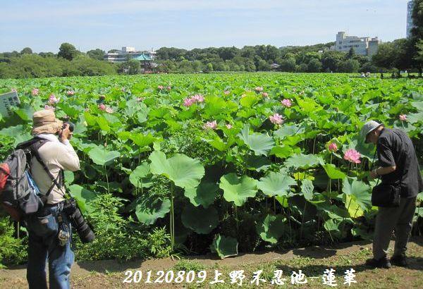 0809shinobazu17