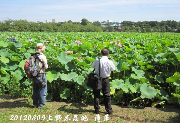 0809shinobazu18
