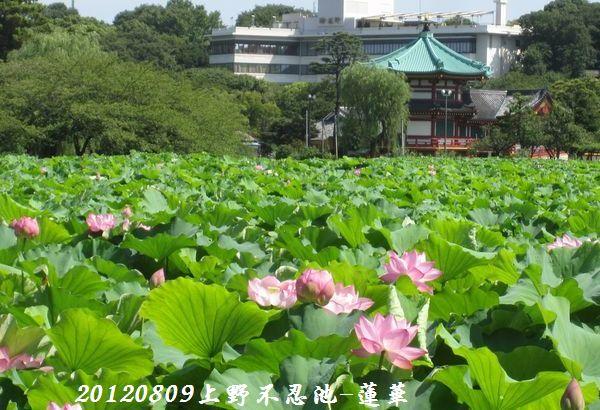 0809shinobazu20