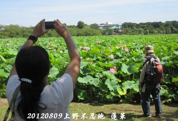 0809shinobazu22