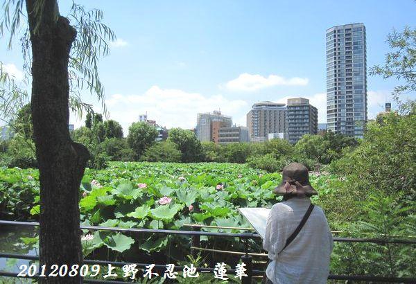 0809shinobazu24