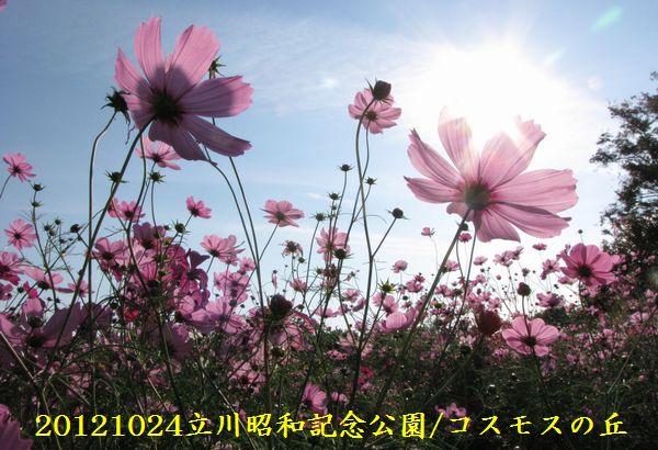 1026cosmos09
