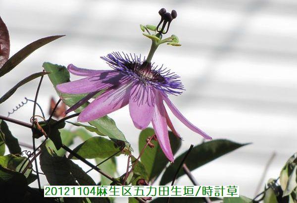 1104banshu04