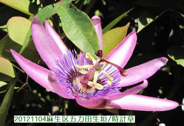 1104banshu05