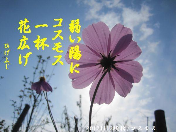 1113banshu02