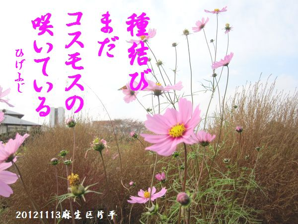 1113banshu05