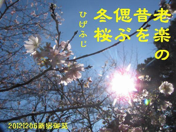 1206fuyuku-02.jpg