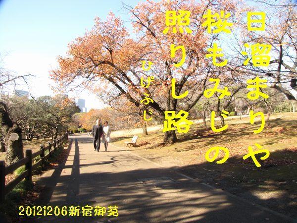 1206fuyuku-05.jpg