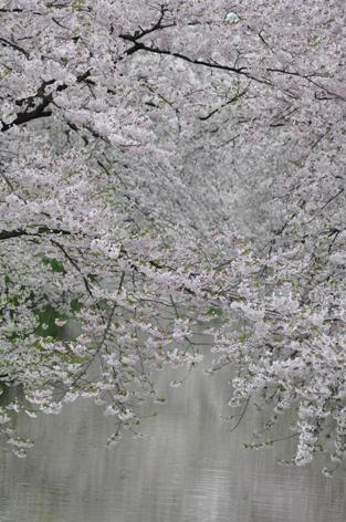弘前公園⑦