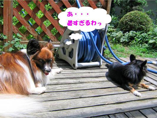yuzu100628-1.jpg