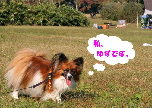 yuzu101108-1.jpg