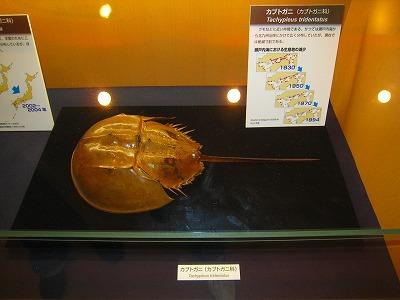 東京科学博物館01