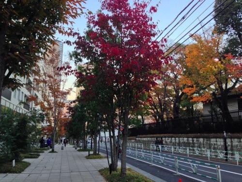 7色づき始めた街路樹