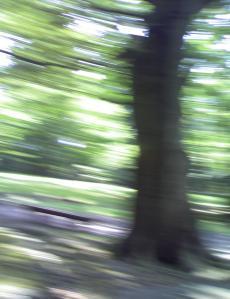 speed+of+summer_convert.jpg