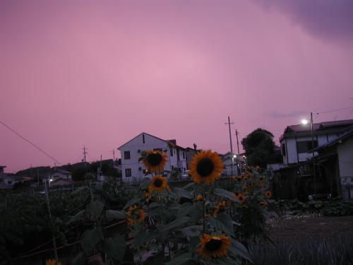 himawariyuyake212011