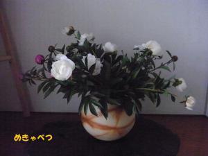 芽キャベツの初めての生け花