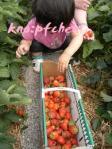 カゴいっぱいのイチゴ