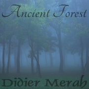 Ancient Forest Image