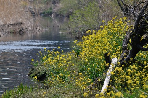 5 春の小川