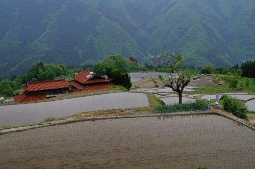 6 石州赤瓦の農家と棚田
