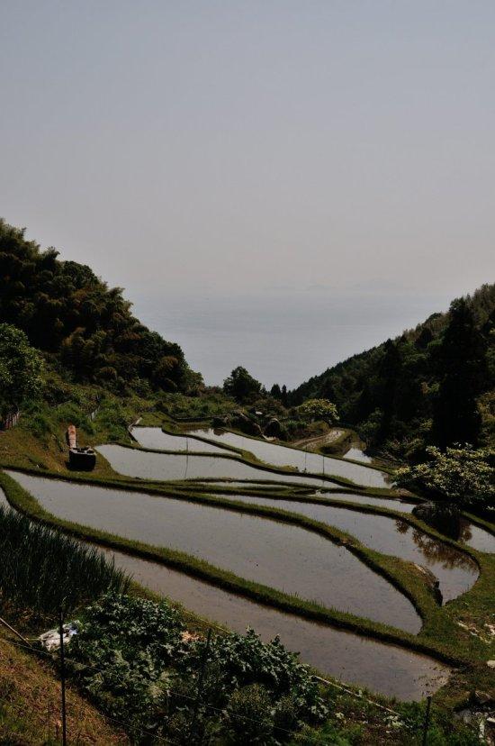 4 海の見える棚田