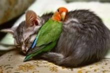 catetbird.jpg