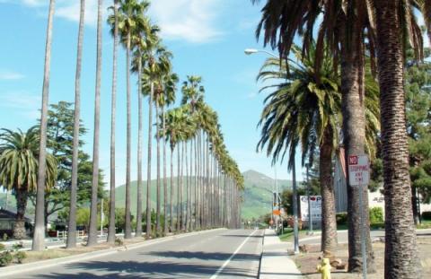 palmtrees-e1289423608845-600x389.jpg