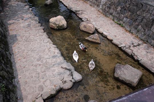 20110430_bicchu_takahashi-08.jpg