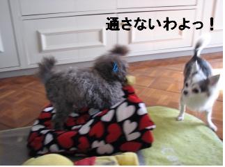 犬マリンのん