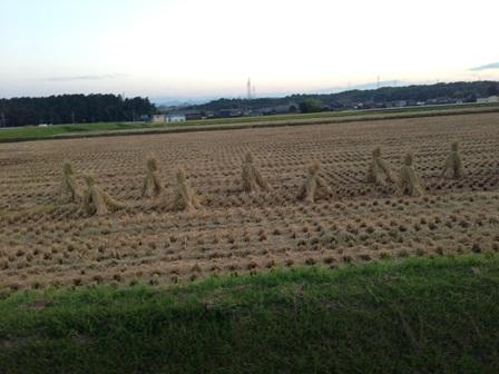稲刈り13
