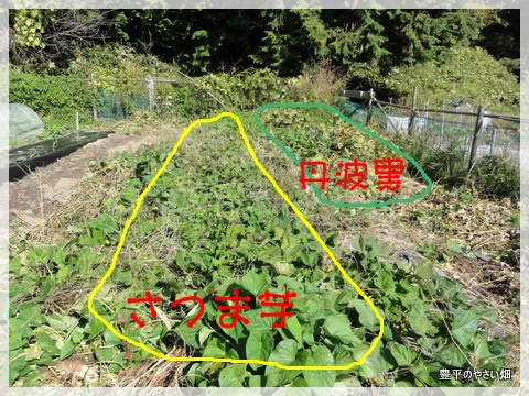 1_20121020220832.jpg