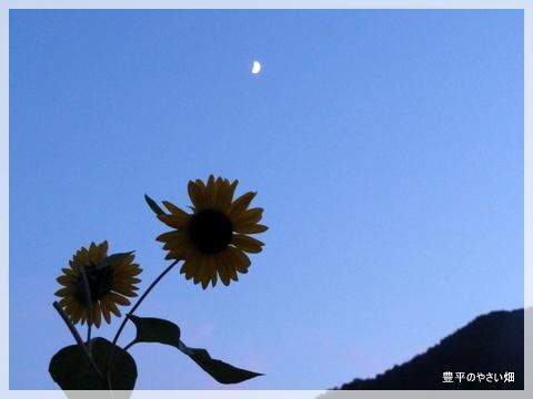 3_20120725215145.jpg
