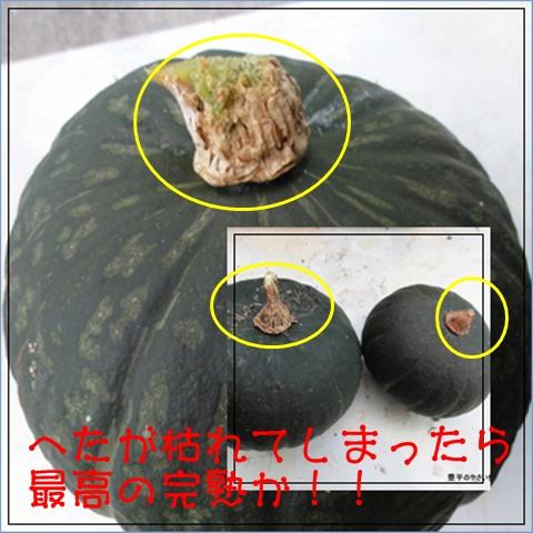 3_20120813221323.jpg