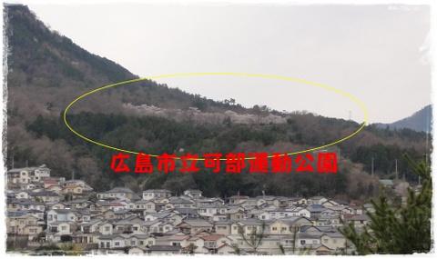 DSC06960.jpg