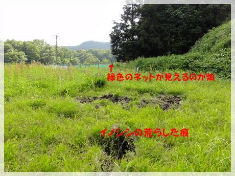 DSC09613.jpg