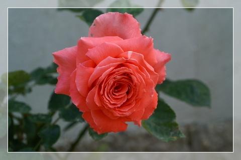 PICT0005_20120522215136.jpg